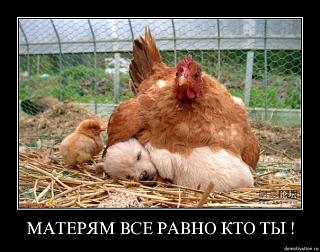 Братья наши меньшие-x_a4e93a2b.jpg