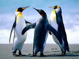 Ошибки на сайте-penguins.jpg
