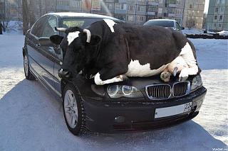 Пикчи на автомобильную тему-7.jpg