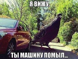 Пикчи на автомобильную тему-18.jpg