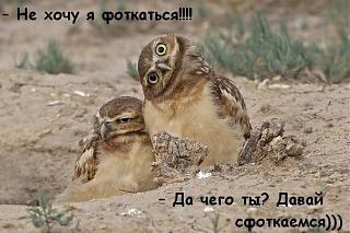 Братья наши меньшие-nqcfjmz8ad0.jpg