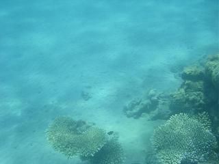 Семейный отдых на море-2013-208-.jpg