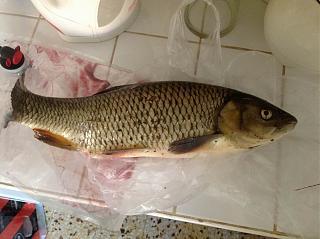 Рыбалка, новости с водоёмов.-ryba-1.jpg