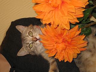 Отдадим кошку в добрые руки.-img_9881.jpg