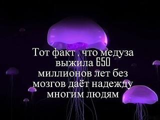 Повышатель настроения-meduza.jpg