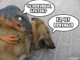 Братья наши меньшие-14.jpg