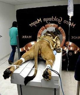 Повышатель настроения-lion.jpg