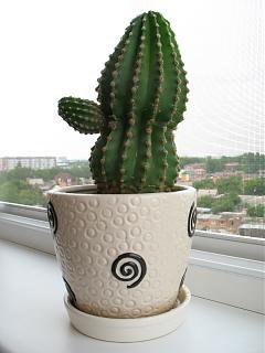 Красивые фотографии сделанные членами клуба-kaktus.jpg
