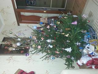 Новогодняя елка-20151228_190041.jpg