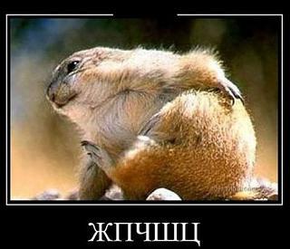 Повышатель настроения-zhpchshc.jpg