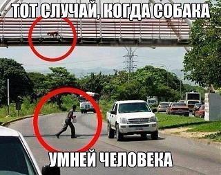 Всегда ли прав пешеход?-za5safkirfe.jpg