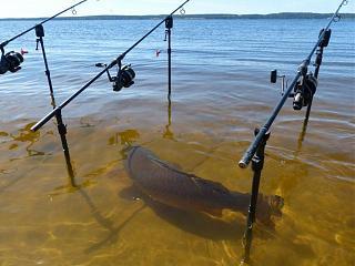 Рыбалка, новости с водоёмов.-image.jpg