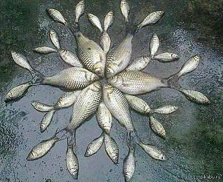 Рыбалка, новости с водоёмов.-1422570748_885654516.jpg