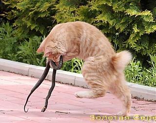 Кот и Туран-72083957.jpg