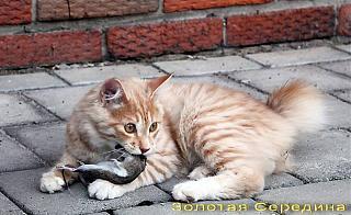 Кот и Туран-72083958.jpg