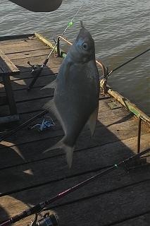 Рыбалка, новости с водоёмов.-003.jpg