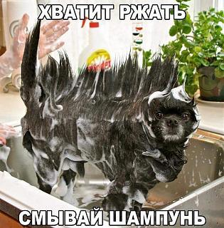 Повышатель настроения-uploadfromtaptalk1470573710241.jpg