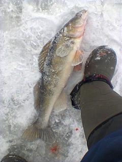 Рыбалка, новости с водоёмов.-foto0508.jpg