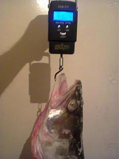 Рыбалка, новости с водоёмов.-foto0510.jpg
